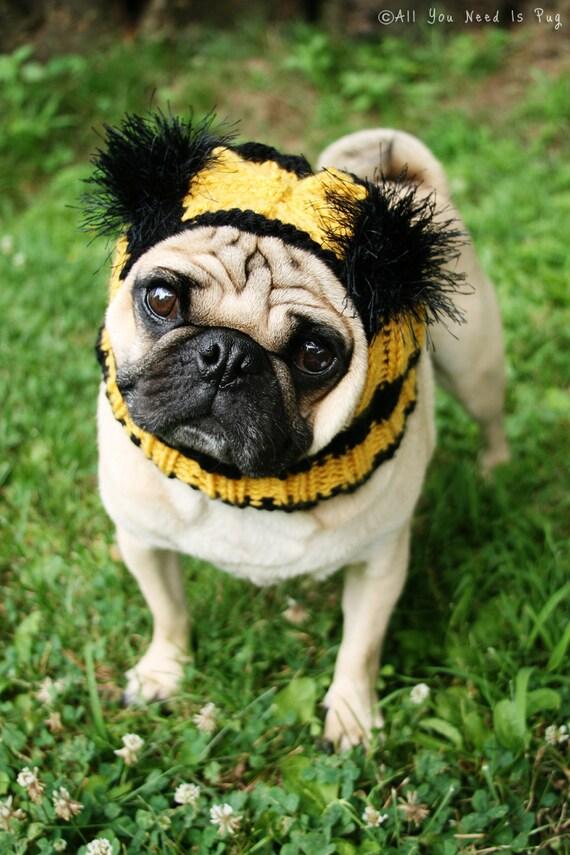 Bumble Bee Dog Hat - Pug Hat