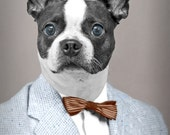 Olan Mills, large original photograph of Boston terrier dog dressed in vintage tweed jacket and bow tie