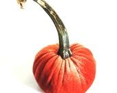 Micro Velvet Pumpkin with Real Stem
