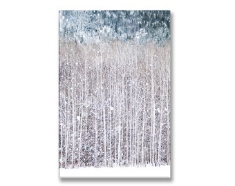 Winter Photo on Canvas, Birch Trees in Snow, Gallery Wrapped Canvas, Nature Photography, Woodland Decor, Large Wall Art