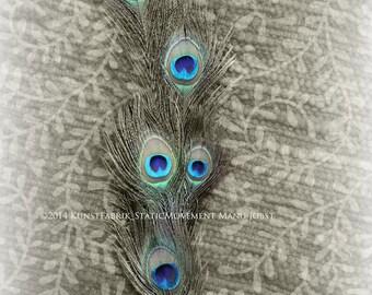 FEATHERED DREAMS  series Peacock Original Color Close Up Art Photograph