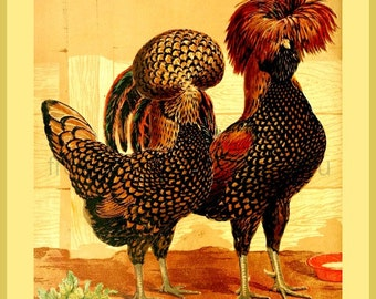 antique victorian poultry illustration golden spangled polish hen and rooster print DIGITAL DOWNLOAD