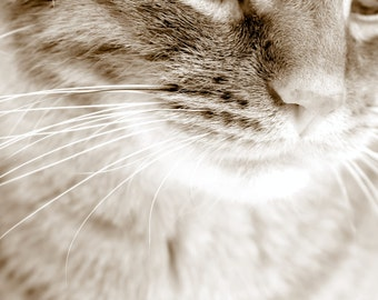 Tiger - Instant Digital Download / Printable - Fine Art Animal Photography - Black and White Cat Photograph