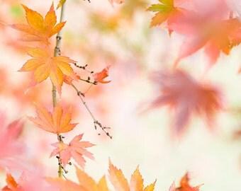 fall color photograph fine art photography pink orange autumn leaves nature photo nursery art wall decor