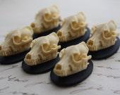 Wolf Skull Cameo Cabs Resin Cabochon Taxidermy Animal Werewolf Wolf Skull Cameo Bat Steampunk Gothic Goth Skull Black Ivory 25x18mm 6 PIECES