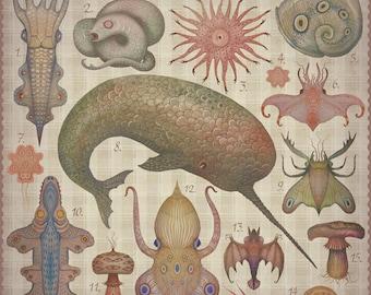 Marine Curiosities tab I - Art print