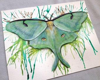 Original - Luna Moth Painting Moth Art Butterfly Art Fine Art by Danielle Trudeau
