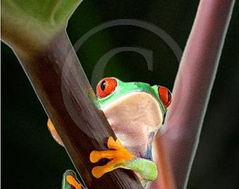 Tree Frog Art, Frog on Tree Branch, Kids Art, Child's Room Art