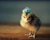 Photo Print 8x10 Chick Wearing Tiny Crown Photograph