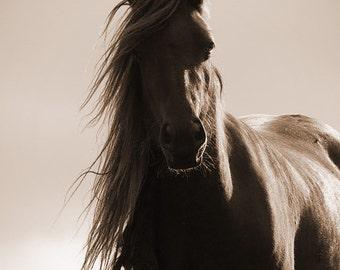Horse wall art, horse decor, horse photography, equine art, rustic, brown, sepia, texture