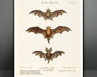 Antique Bats Science Chart Anatomy Animals Natural History Zoology Print Poster - Illustration Art Wall Art Wall Decor 8x10 11x14