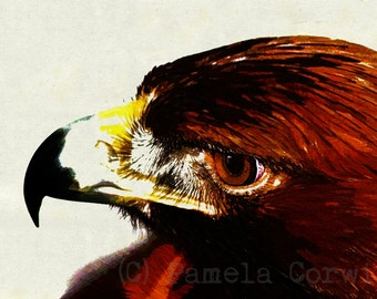 Harris's Hawk drawing: hawk print Harris's hawk print hawk art birds of prey art hawk drawing 11x15""