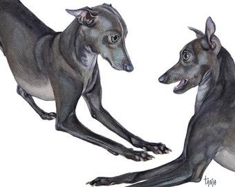 Italian Sighthounds, Italian Greyhound, Iggy, Dog Art print Glycee Pet Portrait  size 8x12