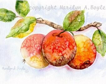 PRINT - APPLES - Watercolor; reproduction, 5 x 7 inch, salt method, garden, fruit, apple tree,
