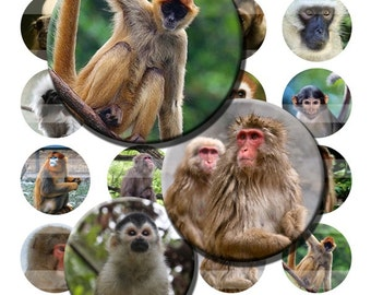 Monkeys Zoo Animals Wild Ape Digital Images Collage Sheet 1.5 inch 38mm Circles INSTANT Download OC05