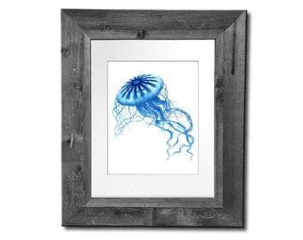 Antique Sealife Print Blue Jellyfish Art Print no.3 Beach Art Decor, Bathroom Wall Art, Coastal Decor, Gnosis Picture Archive 8x10 Print