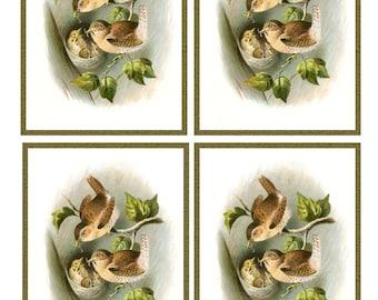 Vintage Pair WRENS feeding 4 CHICKS in NEST - Framed Image Sheet - Digital Instant Download - nature ephemera collage supply