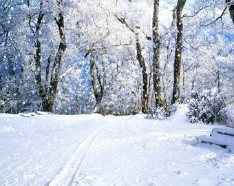 Snowy Road Photography Backdrop