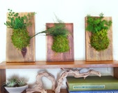 Set of 3- Fern and Moss Reclaimed Rustic Hanging Wood Flat - Care Free, Real Preserved Plant. Moss and Fern Art.
