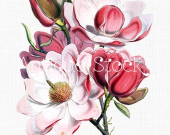 Pink Flowers Clipart 'Magnolia Campbellii' Printable Botanical Illustration for Invitations, Decoupage, Wall Art Prints, Collages...