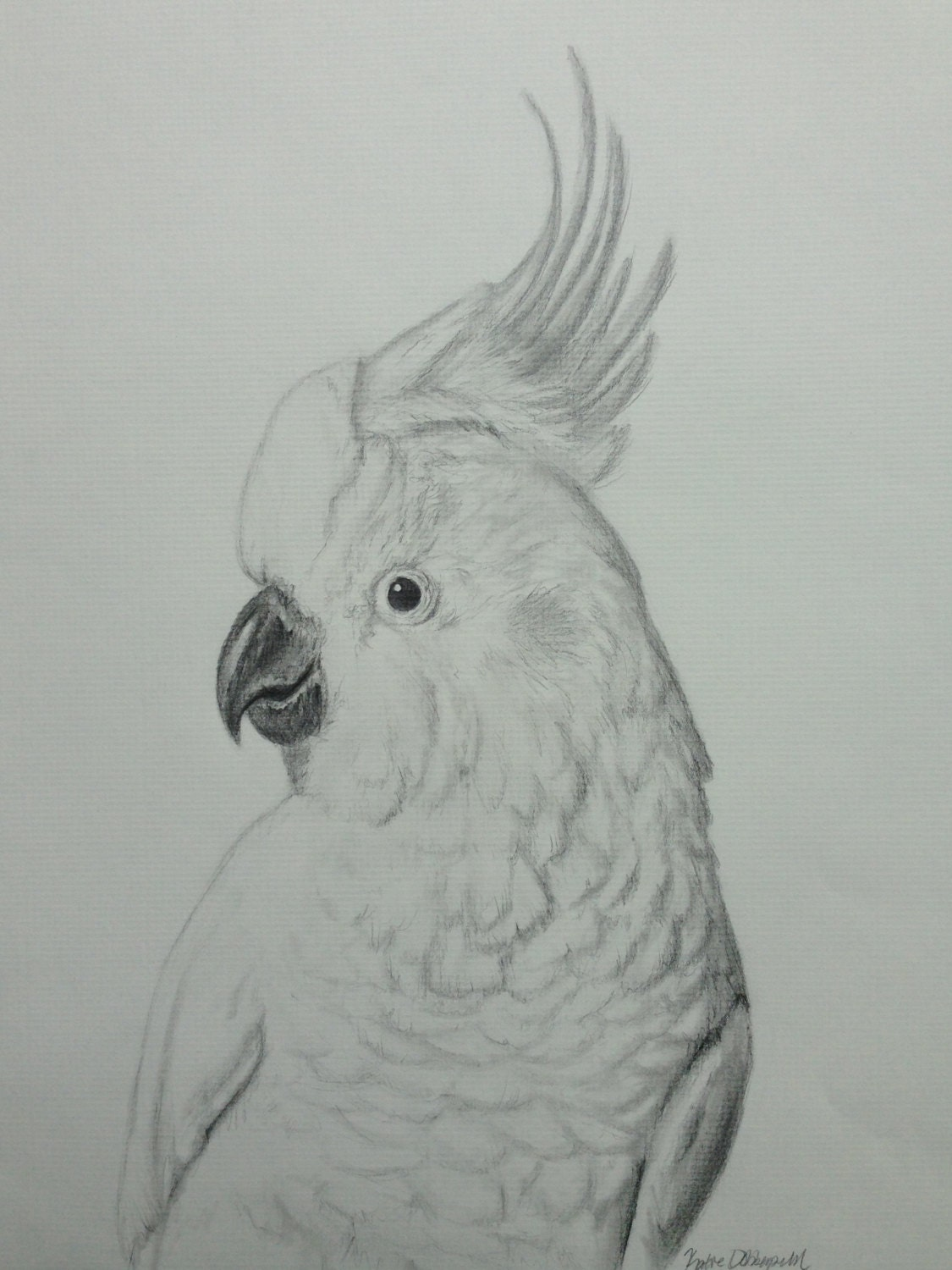 Cockatoo Drawing Cockatoo Profile Pencil