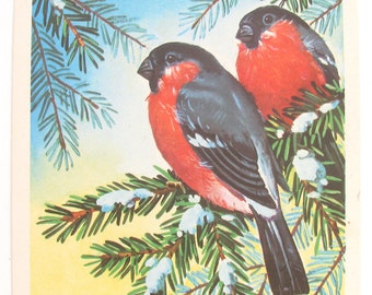 Happy New Year, Bullfinch, Christmas, Illustration, Unused Postcard, Soviet Vintage Postcard, Kurtenko, USSR, 1977