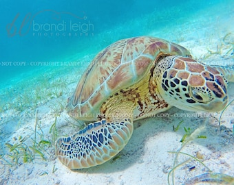 Carribean Sea Turtle,  Belize nature, Belize Sea Turtle,  Photography Print, nature print, wall art