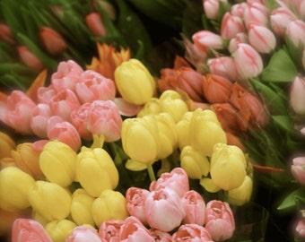 Tulips - Paris, Flower Shop, Wall Art, Flower Photography