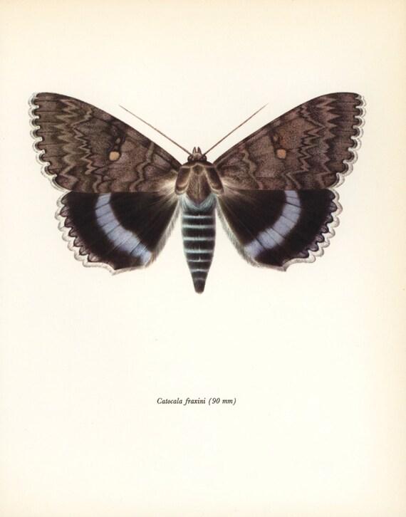 Vintage Butterfly Print  quot Nonpareil Butterfly quot   Urban Loft Decor  1960s    Vintage Butterfly Print