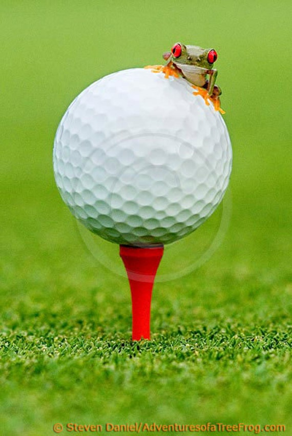 Golf Print - Golf Ball - Golfing, Baby Frog - 16x24 Wall Art, Golfer