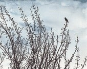 Original drawing of a bird in a tree, ink and watercolour, nature silhouette, free shipping