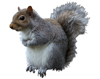 Eastern Gray Squirrel Vinyl Decal