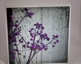 Purple White Flower Photograph on Wood Panel--A Moment in Time--4x4 Fine Art