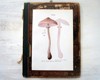 Edible Mushrooms - Parasol Mushroom, Thick Stemmed Morel - 1967 Vintage Book Print