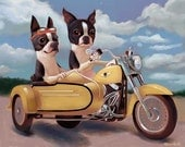 Boston terrier riding a motorcycle