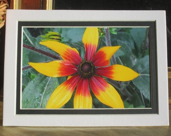 Flowers From My Garden, Daisy, Home Decor, Wall Hanging