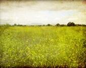 Landscape photograph, flower meadow, rustic wall art, olive green decor, california wall art, nature photography  'Mustard Field'