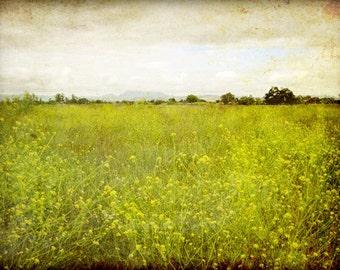 "Landscape photography | flower meadow | rustic wall art | olive green decor | california wall art | nature photography ""Mustard Field"""