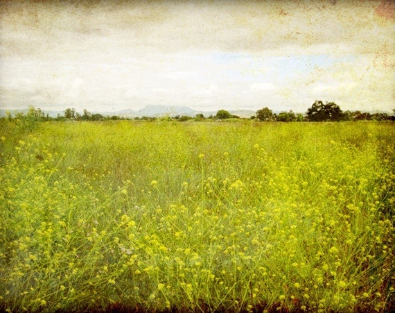 """Landscape photography - flower meadow - rustic wall art - olive green decor - california wall art - nature photography """"Mustard Field"""""""