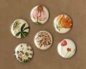 Wildflowers MAGNETS set of 6 assorted