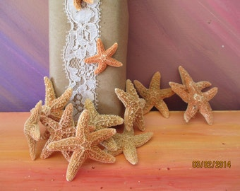 10 Little Florida Sugar Starfish