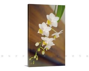 Orchid Print, Canvas Art, Flower Photography, Nature Photo, Ready to Hang, Giclee Canvas Print, Wall Art, Flower Art, MurrayBolesta