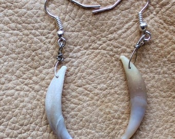 Real red fox canine tooth fang earrings on fish hook ear wires