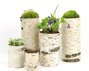 Collection of 5 birch bark vases/candle holders