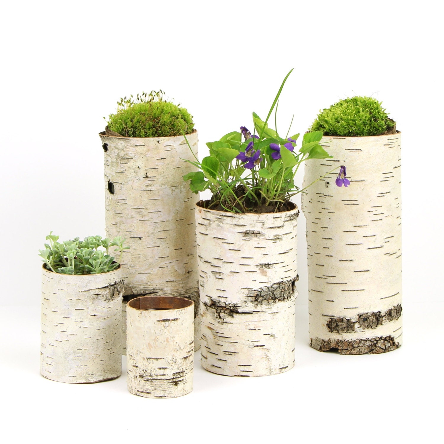 Collection Of 5 Birch Bark Vases Candle Holders