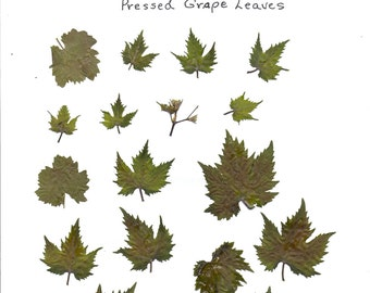 digital collage sheet  pressed grape leaves