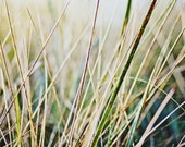 Golden Grass / Seaside / Living Room Decor / Wall Art /