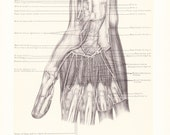1899 Human Anatomy Print - Interosseous Muscles Hand - Vintage Antique Medical Anatomy Art Illustration for Doctor Hospital Office