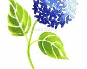 Cobalt Blue Hydrangea Print