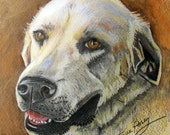 custom Pet portrait Drawing-  11x14